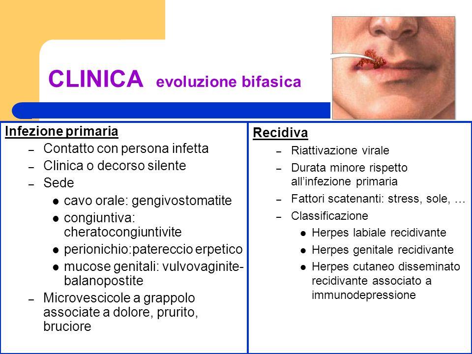 Dott.ssa Elisabetta Muccioli CLINICA evoluzione bifasica Infezione primaria – Contatto con persona infetta – Clinica o decorso silente – Sede cavo ora