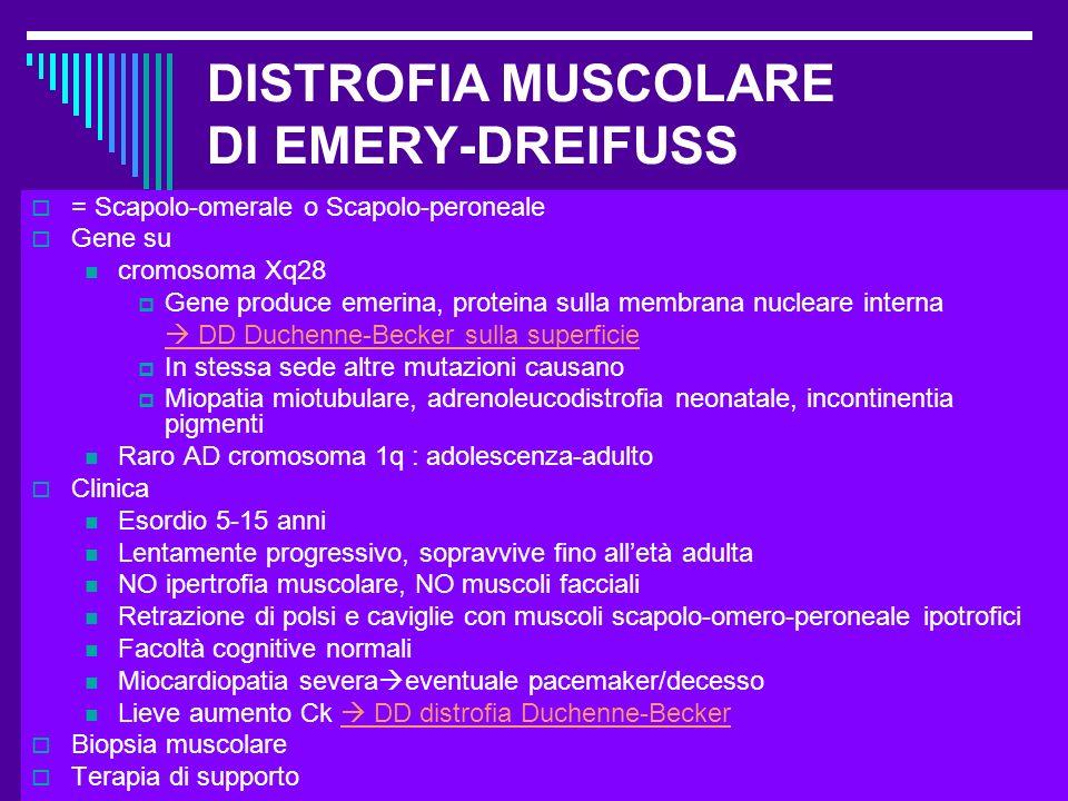 Dott.ssa Elisabetta Muccioli DISTROFIA MUSCOLARE DI EMERY-DREIFUSS = Scapolo-omerale o Scapolo-peroneale Gene su cromosoma Xq28 Gene produce emerina,