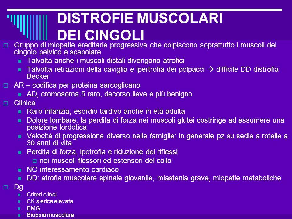 Dott.ssa Elisabetta Muccioli DISTROFIE MUSCOLARI DEI CINGOLI Gruppo di miopatie ereditarie progressive che colpiscono soprattutto i muscoli del cingol