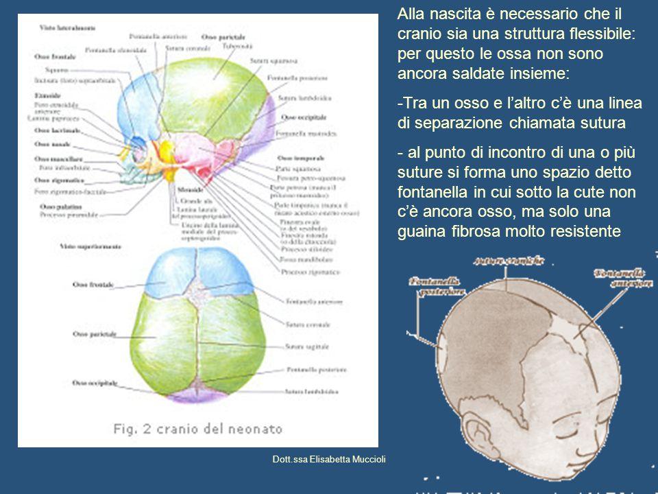 Dott.ssa Elisabetta Muccioli Linee di sutura Coronaria : tra osso frontale e ossa parietali Lambdoidea : tra ossa parietali e osso occipitale Sagittale : tra le due ossa parietali, sulla linea mediana Metopica : lungo la linea mediana dellosso frontale (salda vero il 6°mese di vita intrauterina) Fontanelle : punti di incontro delle suture Mediane (importanti) Bregmatica: tra osso frontale e ossa parietali – salda 12-18 mesi Lambdoidea: tra ossa parietali e occipite – salda 2 mese Laterali Pteriche: tra ossa parietale, sfenoide e frontale – salda 4-6 mesi Asteriche: tra ossa temporale, parietale e occipitale – salda 4- 6 mesi
