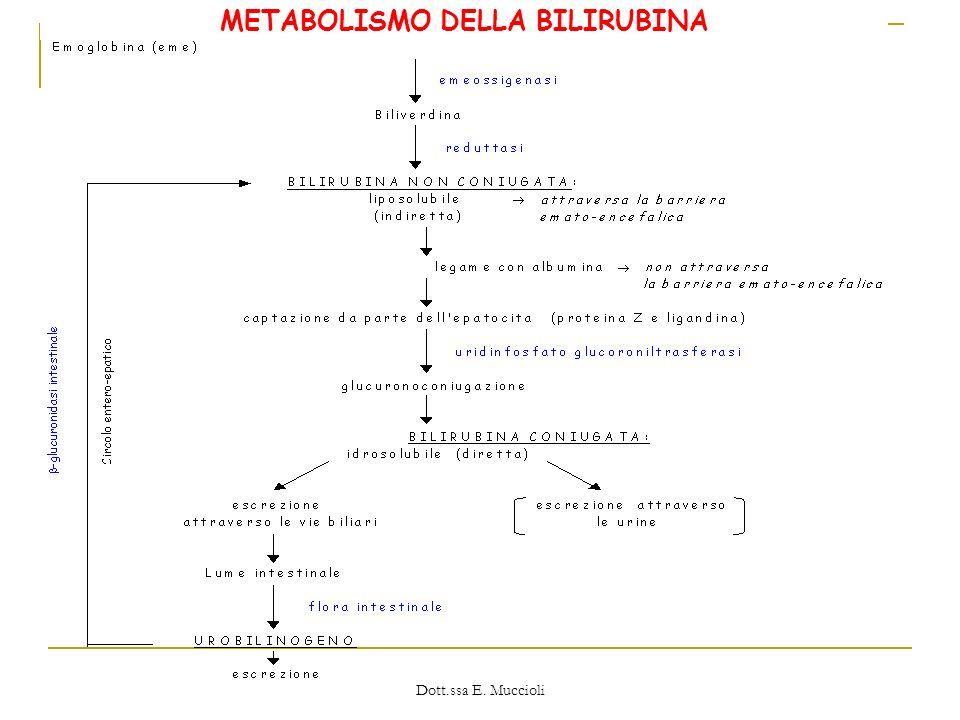 Dott.ssa E. Muccioli METABOLISMO DELLA BILIRUBINA