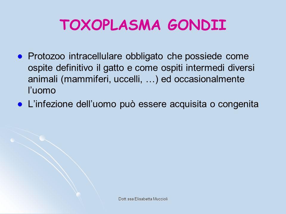 Dott.ssa Elisabetta Muccioli TOXOPLASMA GONDII Protozoo intracellulare obbligato che possiede come ospite definitivo il gatto e come ospiti intermedi