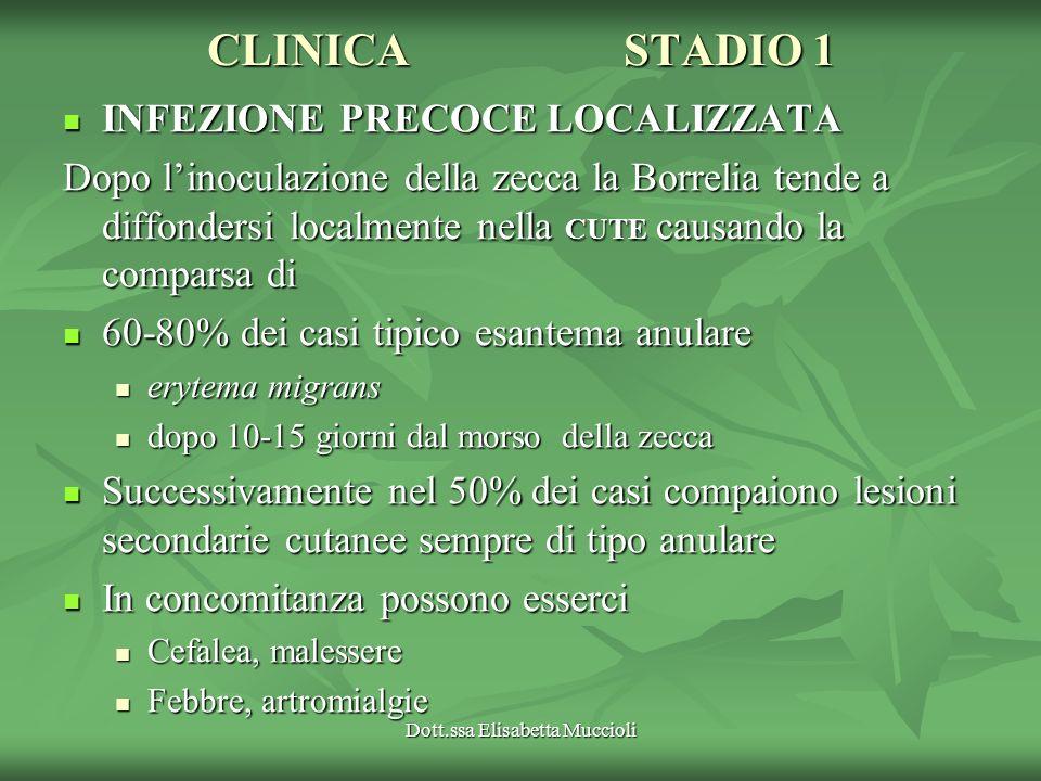 Dott.ssa Elisabetta Muccioli CLINICASTADIO 1 INFEZIONE PRECOCE LOCALIZZATA INFEZIONE PRECOCE LOCALIZZATA Dopo linoculazione della zecca la Borrelia te