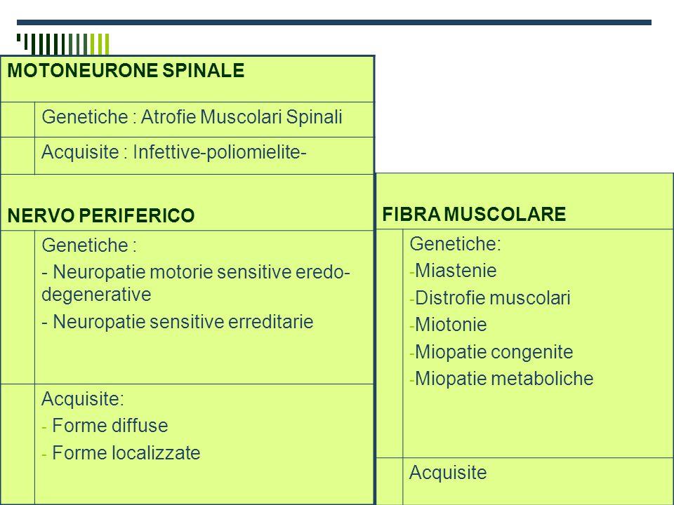 Dott.ssa Elisabetta Muccioli MOTONEURONE SPINALE Genetiche : Atrofie Muscolari Spinali Acquisite : Infettive-poliomielite- NERVO PERIFERICO Genetiche