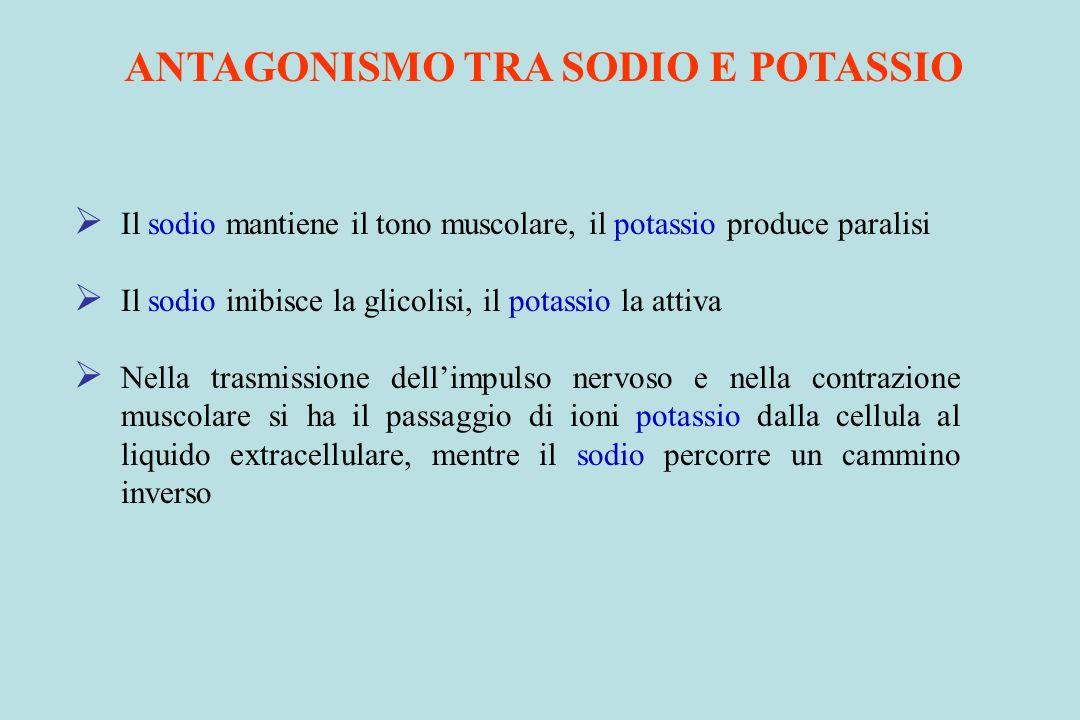 ANTAGONISMO TRA SODIO E POTASSIO Il sodio mantiene il tono muscolare, il potassio produce paralisi Il sodio inibisce la glicolisi, il potassio la atti