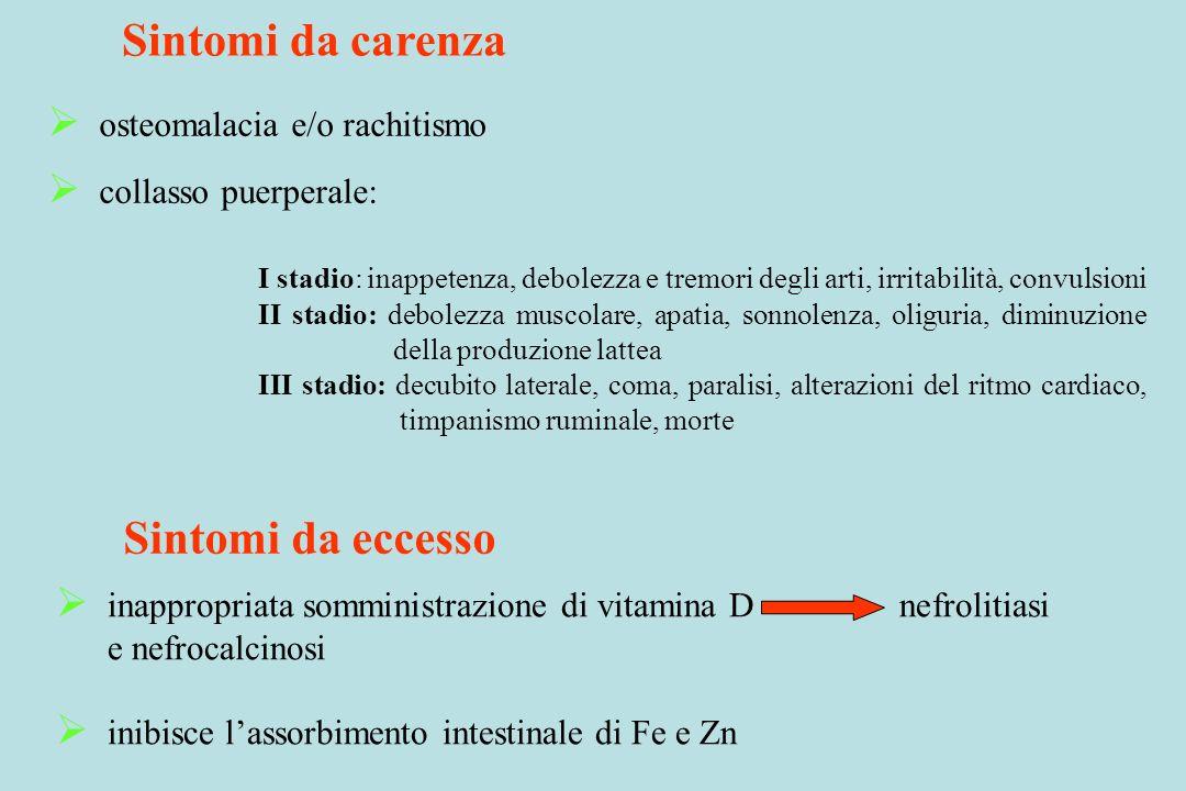 Sintomi da carenza osteomalacia e/o rachitismo collasso puerperale: I stadio: inappetenza, debolezza e tremori degli arti, irritabilità, convulsioni I
