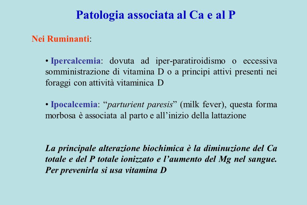 Nei Ruminanti: Ipercalcemia: dovuta ad iper-paratiroidismo o eccessiva somministrazione di vitamina D o a principi attivi presenti nei foraggi con att