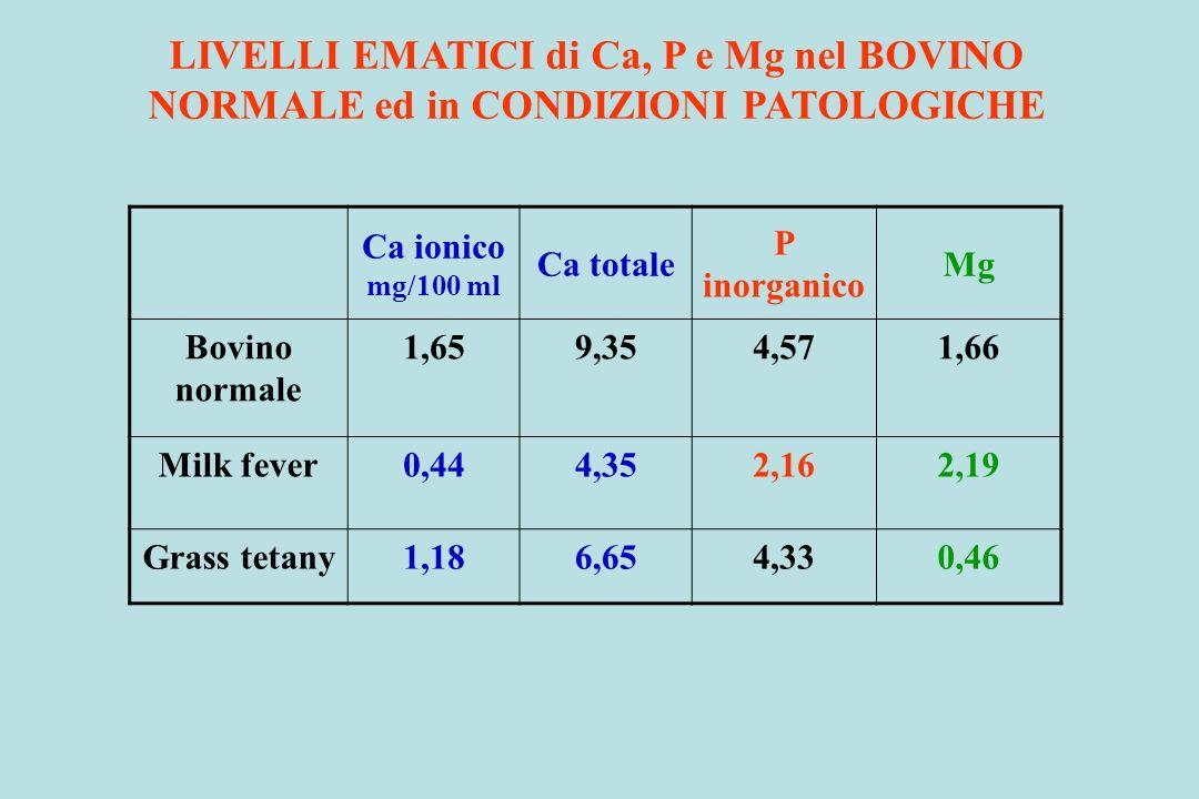LIVELLI EMATICI di Ca, P e Mg nel BOVINO NORMALE ed in CONDIZIONI PATOLOGICHE Ca ionico mg/100 ml Ca totale P inorganico Mg Bovino normale 1,659,354,5