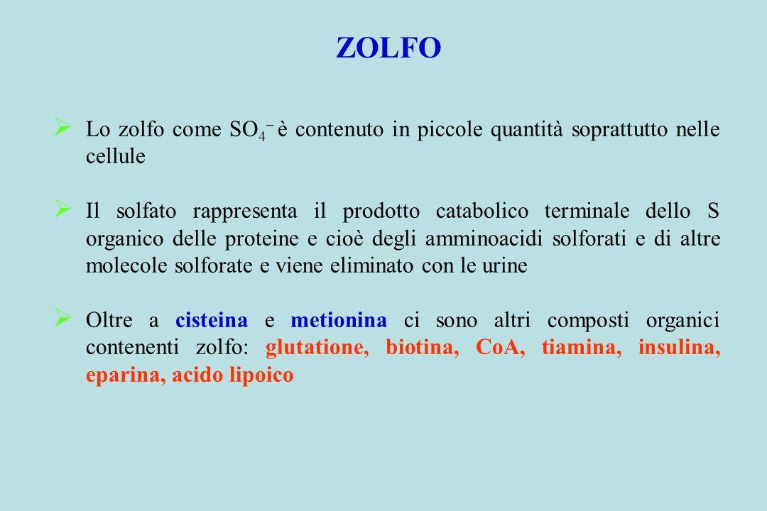 ZOLFO Lo zolfo come SO 4 – è contenuto in piccole quantità soprattutto nelle cellule Il solfato rappresenta il prodotto catabolico terminale dello S o