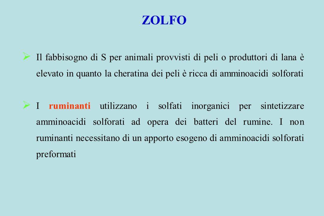 ZOLFO Il fabbisogno di S per animali provvisti di peli o produttori di lana è elevato in quanto la cheratina dei peli è ricca di amminoacidi solforati