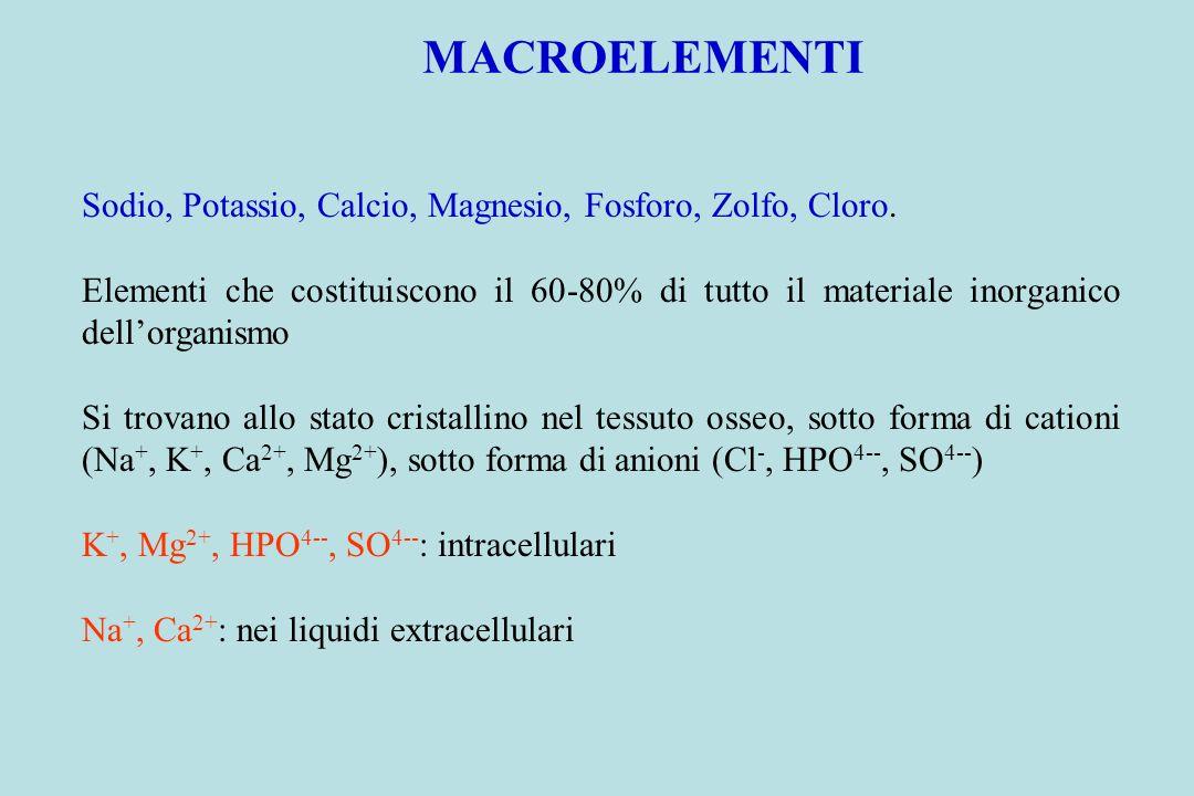 MACROELEMENTI Sodio, Potassio, Calcio, Magnesio, Fosforo, Zolfo, Cloro. Elementi che costituiscono il 60-80% di tutto il materiale inorganico dellorga