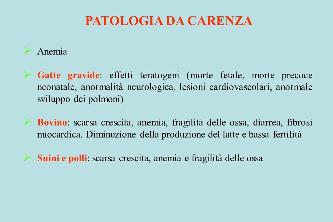 PATOLOGIA DA CARENZA Anemia Gatte gravide: effetti teratogeni (morte fetale, morte precoce neonatale, anormalità neurologica, lesioni cardiovascolari,