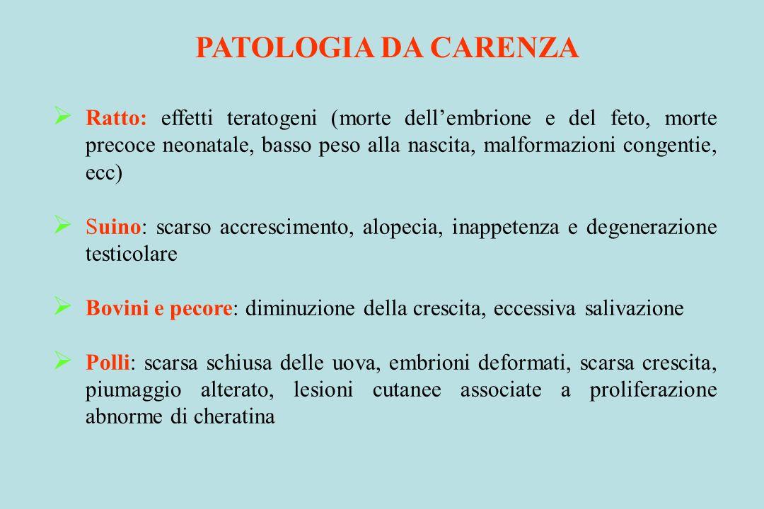 PATOLOGIA DA CARENZA Ratto: effetti teratogeni (morte dellembrione e del feto, morte precoce neonatale, basso peso alla nascita, malformazioni congent