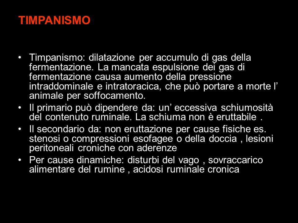 Timpanismo: dilatazione per accumulo di gas della fermentazione. La mancata espulsione dei gas di fermentazione causa aumento della pressione intraddo