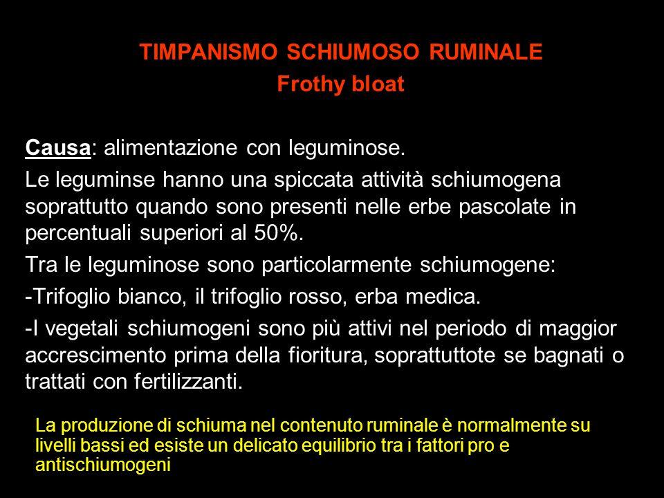 TIMPANISMO SCHIUMOSO RUMINALE Frothy bloat Causa: alimentazione con leguminose. Le leguminse hanno una spiccata attività schiumogena soprattutto quand