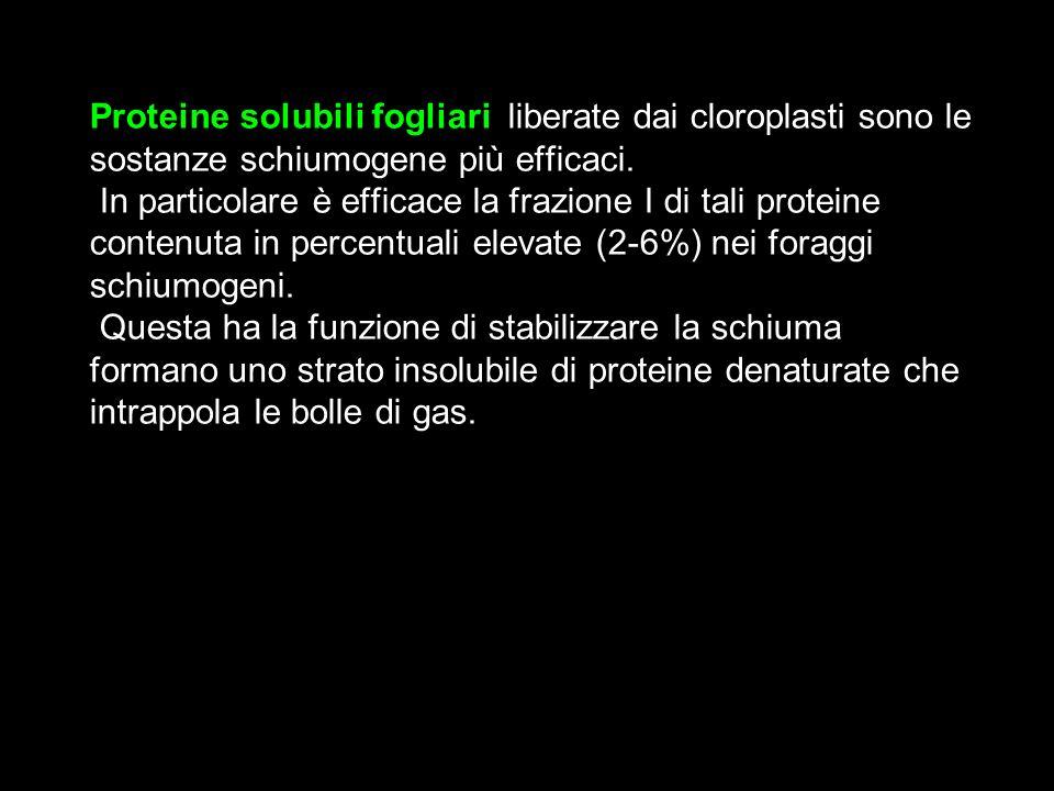 Proteine solubili fogliari, liberate dai cloroplasti sono le sostanze schiumogene più efficaci. In particolare è efficace la frazione I di tali protei