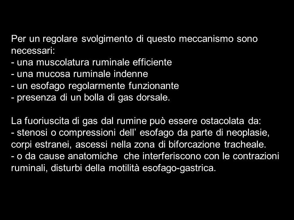 Per un regolare svolgimento di questo meccanismo sono necessari: - una muscolatura ruminale efficiente - una mucosa ruminale indenne - un esofago rego