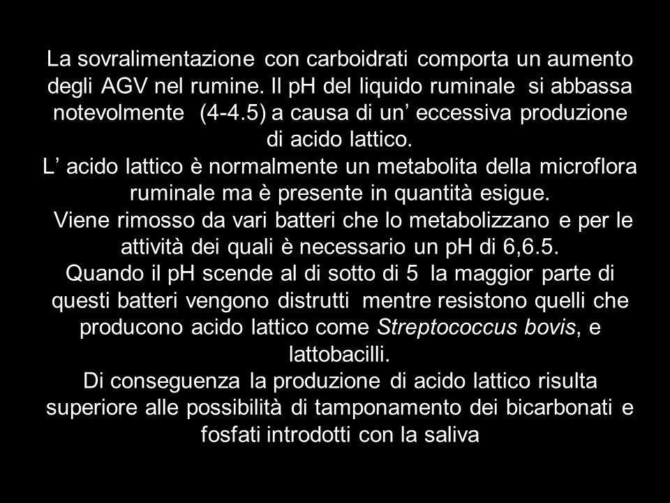 La sovralimentazione con carboidrati comporta un aumento degli AGV nel rumine. Il pH del liquido ruminale si abbassa notevolmente (4-4.5) a causa di u