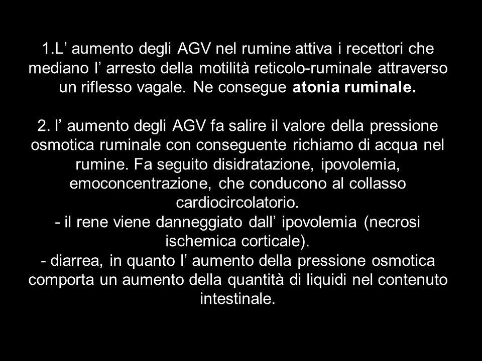 1.L aumento degli AGV nel rumine attiva i recettori che mediano l arresto della motilità reticolo-ruminale attraverso un riflesso vagale. Ne consegue