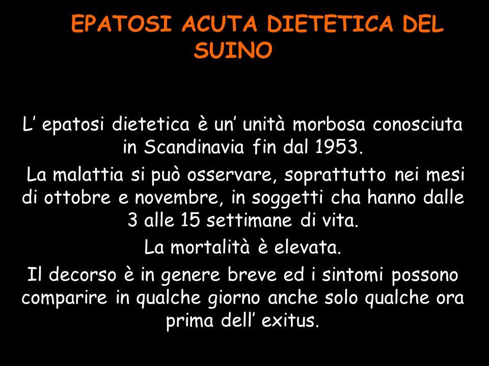 EPATOSI ACUTA DIETETICA DEL SUINO L epatosi dietetica è un unità morbosa conosciuta in Scandinavia fin dal 1953. La malattia si può osservare, sopratt