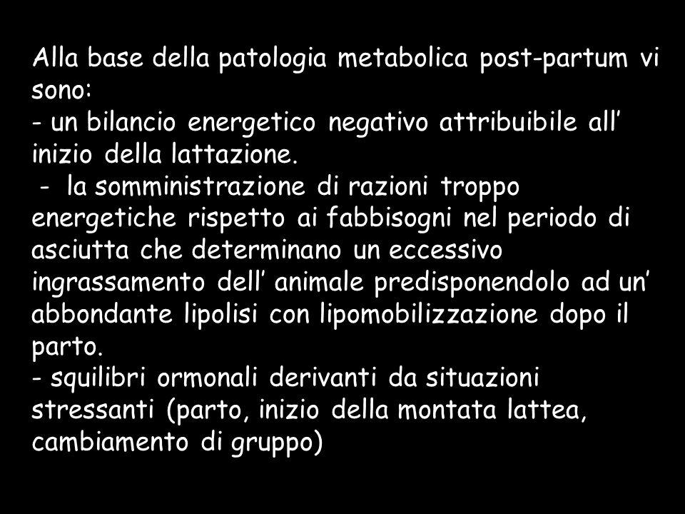 Alla base della patologia metabolica post-partum vi sono: - un bilancio energetico negativo attribuibile all inizio della lattazione. - la somministra