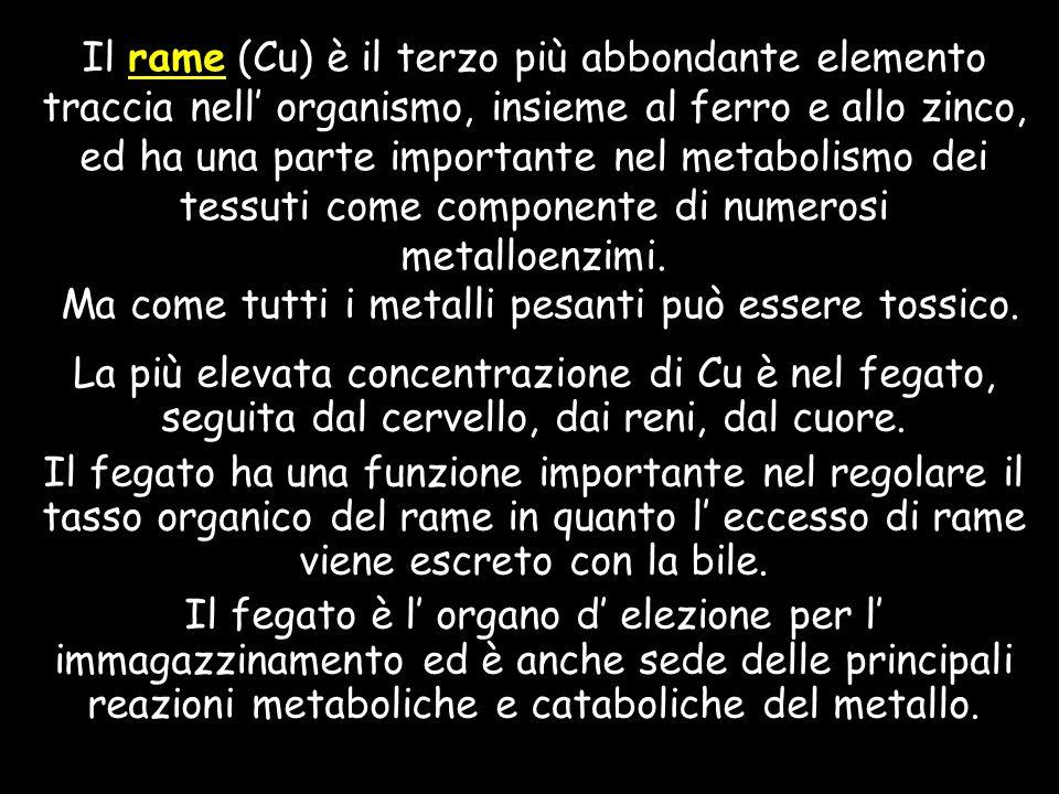 Il rame (Cu) è il terzo più abbondante elemento traccia nell organismo, insieme al ferro e allo zinco, ed ha una parte importante nel metabolismo dei