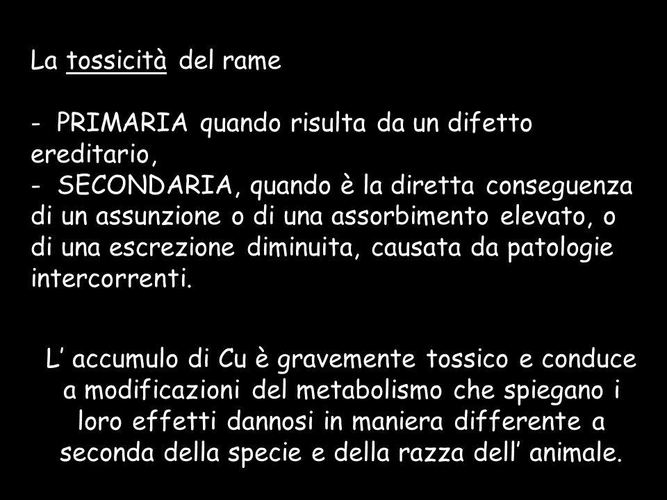 La tossicità del rame - PRIMARIA quando risulta da un difetto ereditario, - SECONDARIA, quando è la diretta conseguenza di un assunzione o di una asso