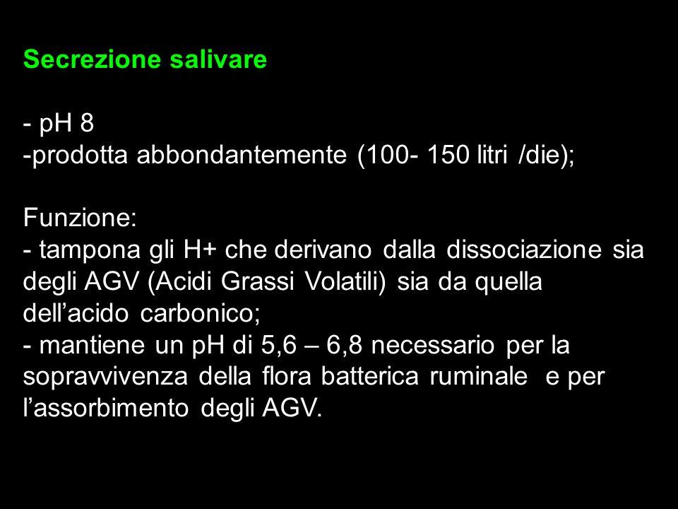 Secrezione salivare - pH 8 -prodotta abbondantemente (100- 150 litri /die); Funzione: - tampona gli H+ che derivano dalla dissociazione sia degli AGV