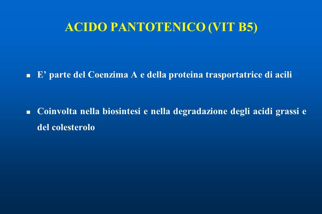 ACIDO PANTOTENICO (VIT B5) E parte del Coenzima A e della proteina trasportatrice di acili Coinvolta nella biosintesi e nella degradazione degli acidi grassi e del colesterolo