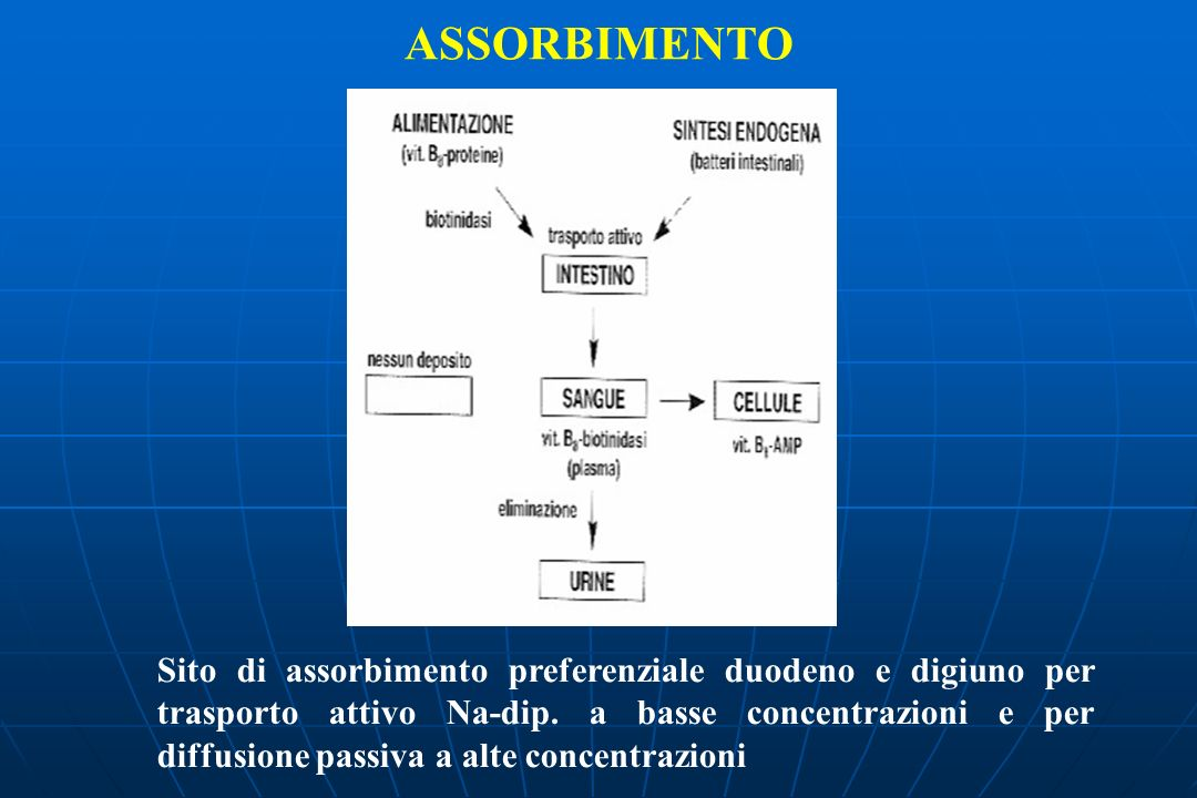 ASSORBIMENTO Sito di assorbimento preferenziale duodeno e digiuno per trasporto attivo Na-dip.