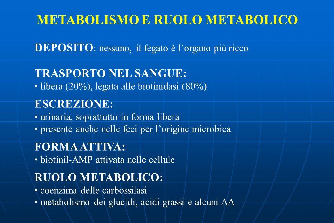METABOLISMO E RUOLO METABOLICO DEPOSITO : nessuno, il fegato è lorgano più ricco TRASPORTO NEL SANGUE: libera (20%), legata alle biotinidasi (80%) ESCREZIONE: urinaria, soprattutto in forma libera presente anche nelle feci per lorigine microbica FORMA ATTIVA: biotinil-AMP attivata nelle cellule RUOLO METABOLICO: coenzima delle carbossilasi metabolismo dei glucidi, acidi grassi e alcuni AA