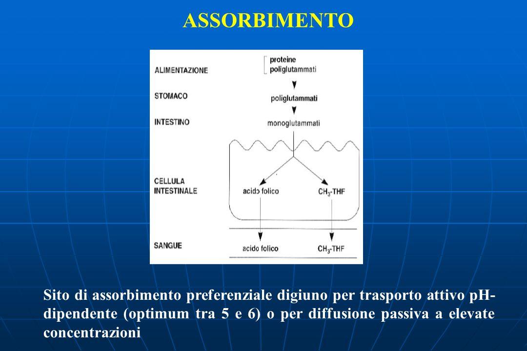 ASSORBIMENTO Sito di assorbimento preferenziale digiuno per trasporto attivo pH- dipendente (optimum tra 5 e 6) o per diffusione passiva a elevate con
