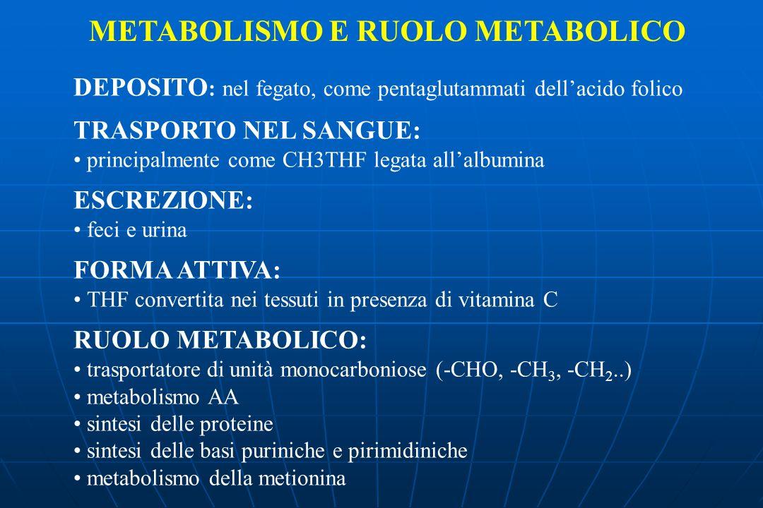 DEPOSITO : nel fegato, come pentaglutammati dellacido folico TRASPORTO NEL SANGUE: principalmente come CH3THF legata allalbumina ESCREZIONE: feci e urina FORMA ATTIVA: THF convertita nei tessuti in presenza di vitamina C RUOLO METABOLICO: trasportatore di unità monocarboniose (-CHO, -CH 3, -CH 2..) metabolismo AA sintesi delle proteine sintesi delle basi puriniche e pirimidiniche metabolismo della metionina METABOLISMO E RUOLO METABOLICO