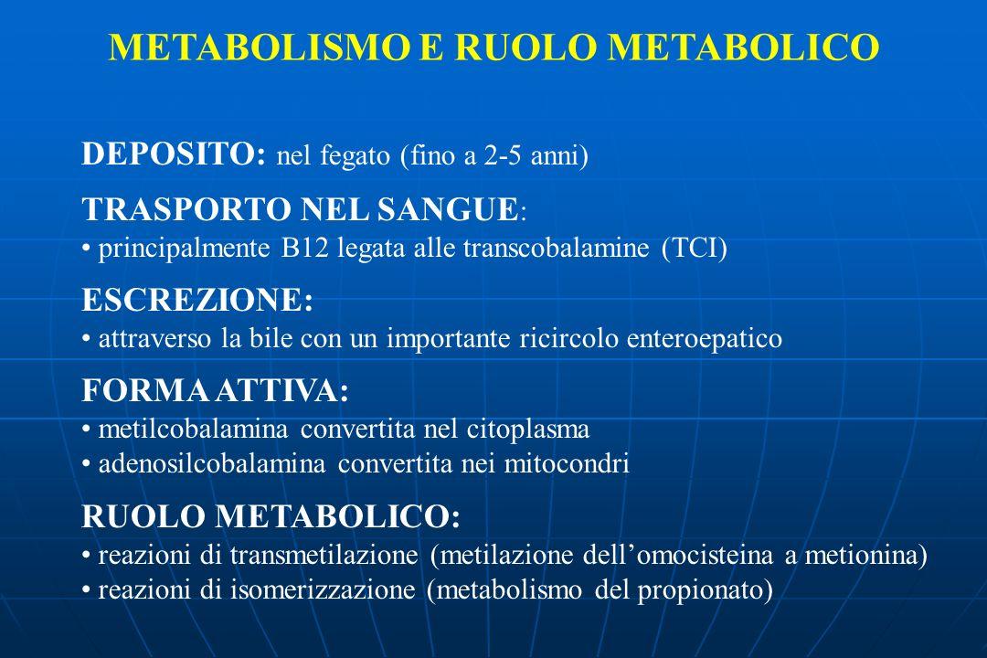 DEPOSITO: nel fegato (fino a 2-5 anni) TRASPORTO NEL SANGUE : principalmente B12 legata alle transcobalamine (TCI) ESCREZIONE: attraverso la bile con un importante ricircolo enteroepatico FORMA ATTIVA: metilcobalamina convertita nel citoplasma adenosilcobalamina convertita nei mitocondri RUOLO METABOLICO: reazioni di transmetilazione (metilazione dellomocisteina a metionina) reazioni di isomerizzazione (metabolismo del propionato) METABOLISMO E RUOLO METABOLICO