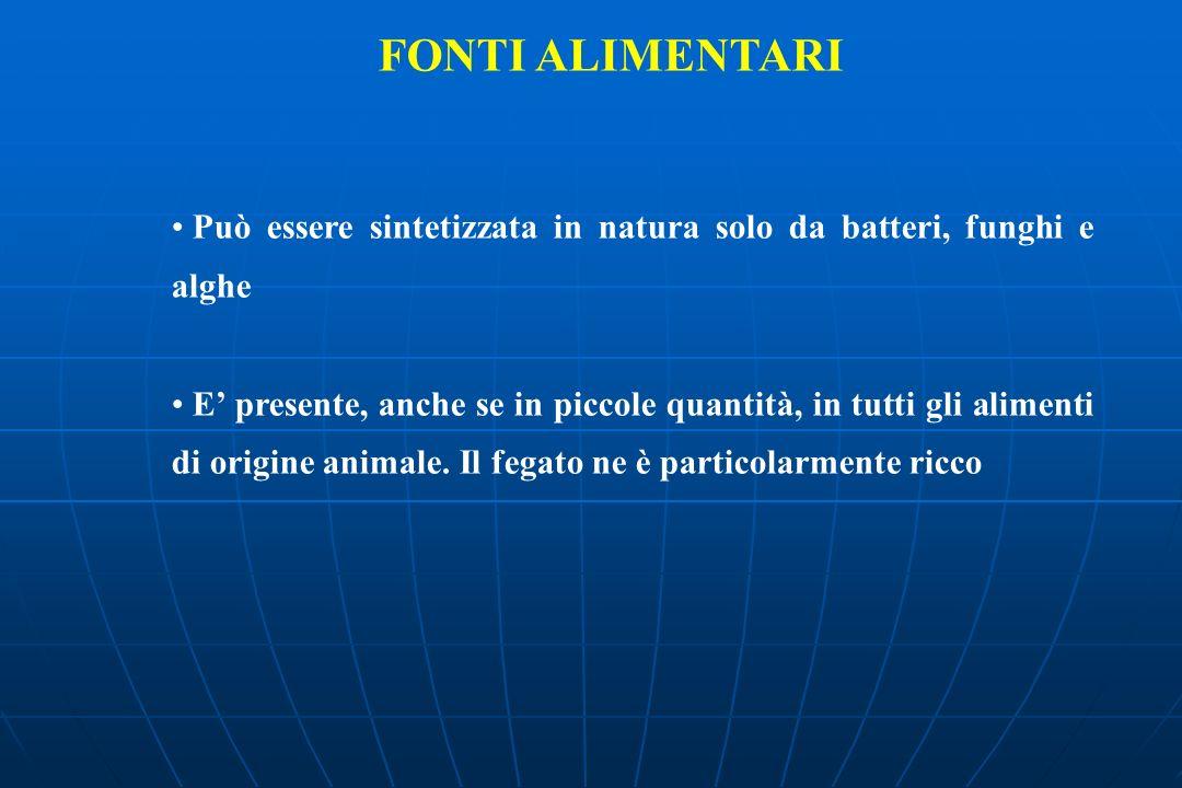 FONTI ALIMENTARI Può essere sintetizzata in natura solo da batteri, funghi e alghe E presente, anche se in piccole quantità, in tutti gli alimenti di origine animale.