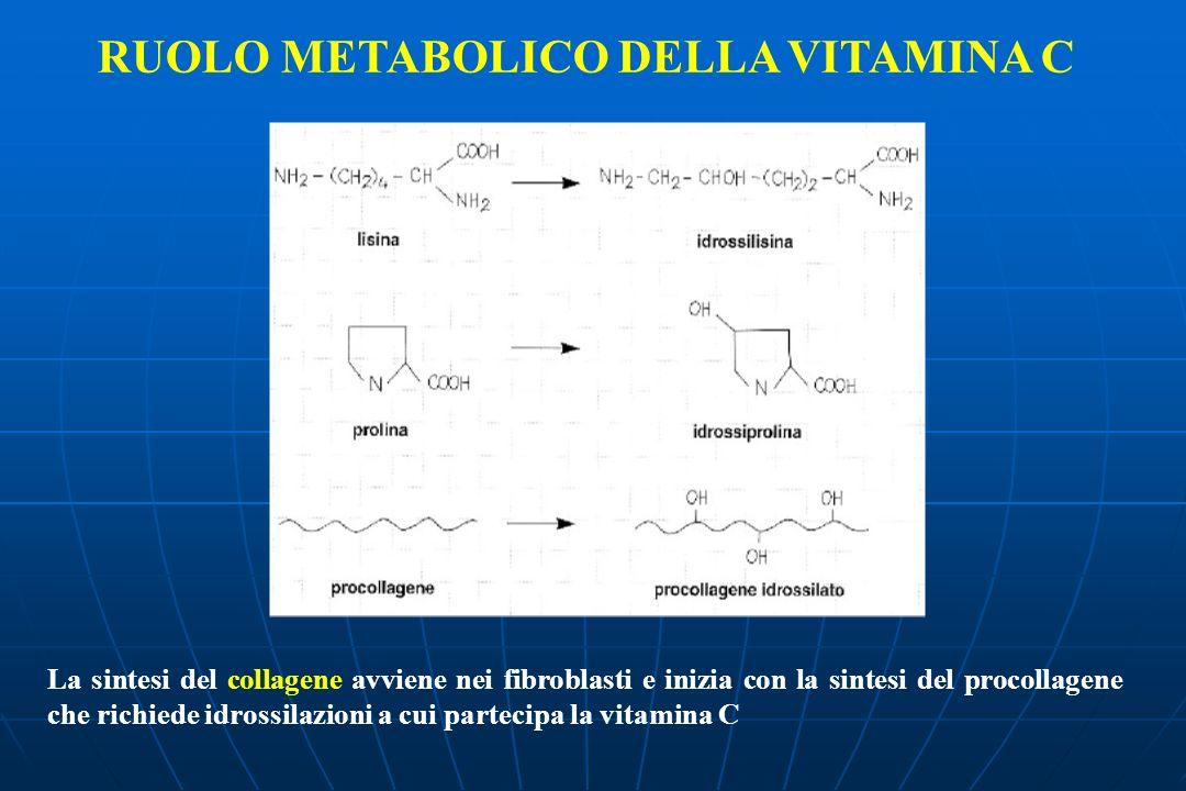 La sintesi del collagene avviene nei fibroblasti e inizia con la sintesi del procollagene che richiede idrossilazioni a cui partecipa la vitamina C RUOLO METABOLICO DELLA VITAMINA C