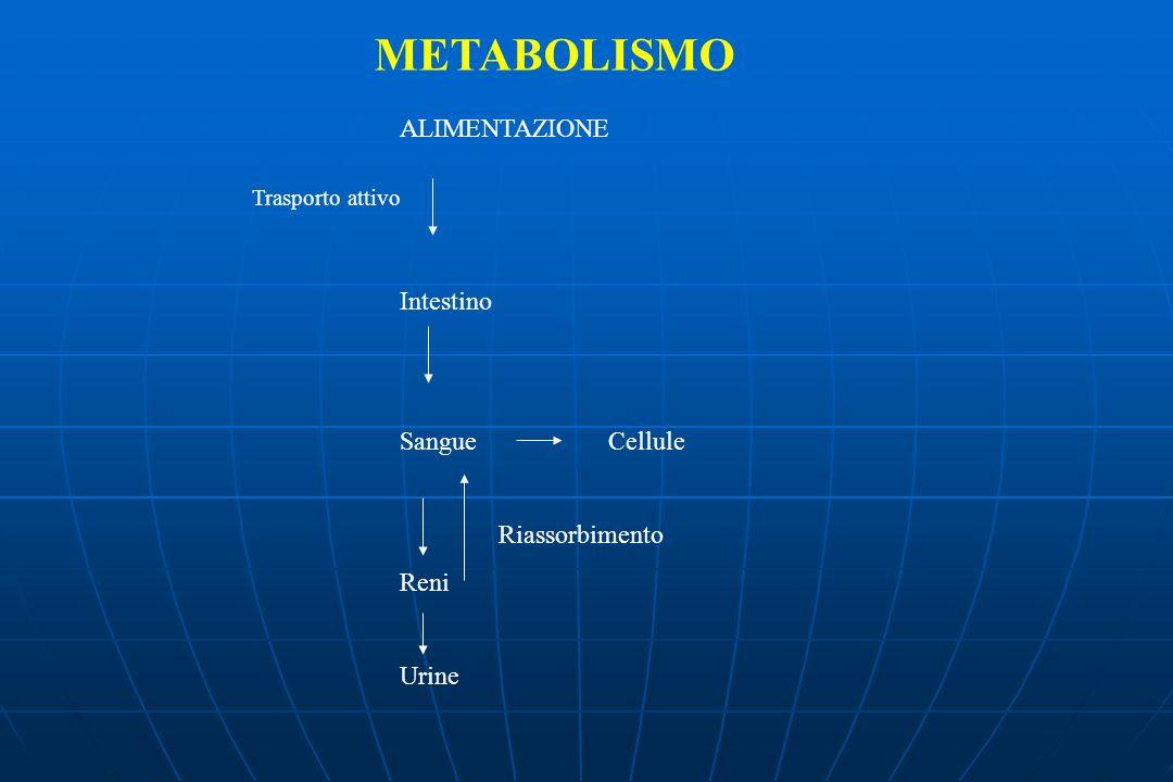 METABOLISMO ALIMENTAZIONE Intestino SangueCellule Reni Urine Trasporto attivo Riassorbimento
