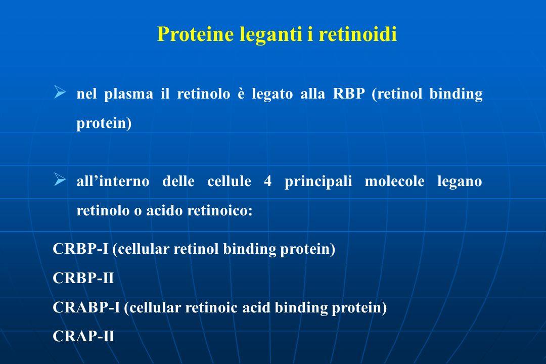 Proteine leganti i retinoidi nel plasma il retinolo è legato alla RBP (retinol binding protein) allinterno delle cellule 4 principali molecole legano retinolo o acido retinoico: CRBP-I (cellular retinol binding protein) CRBP-II CRABP-I (cellular retinoic acid binding protein) CRAP-II