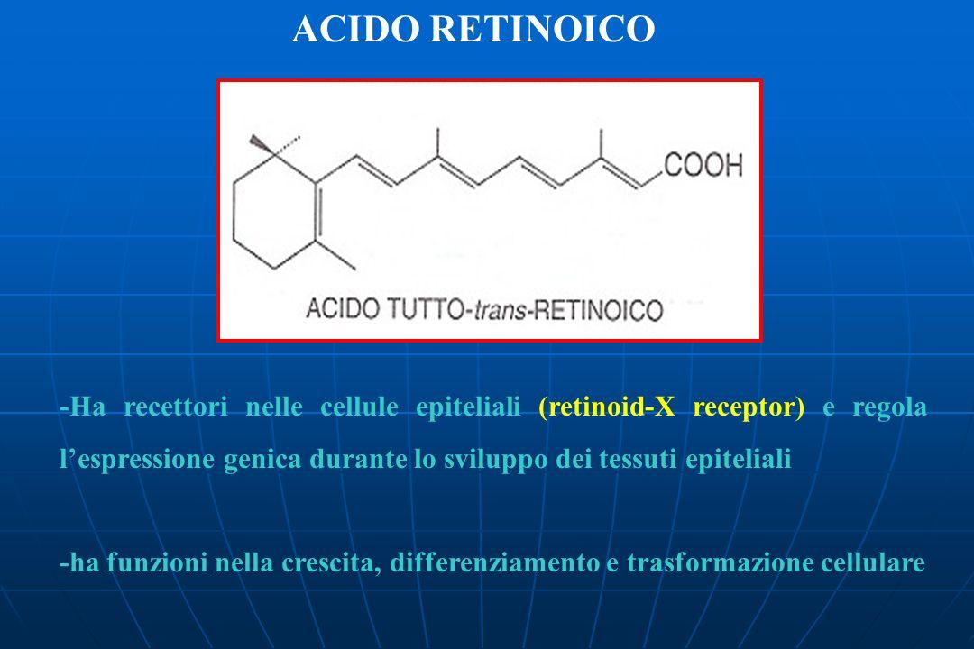 ACIDO RETINOICO -Ha recettori nelle cellule epiteliali (retinoid-X receptor) e regola lespressione genica durante lo sviluppo dei tessuti epiteliali -ha funzioni nella crescita, differenziamento e trasformazione cellulare