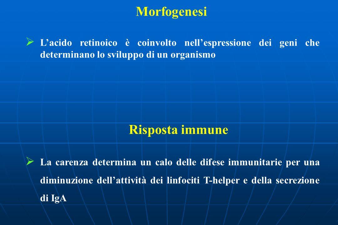 Morfogenesi Lacido retinoico è coinvolto nellespressione dei geni che determinano lo sviluppo di un organismo Risposta immune La carenza determina un calo delle difese immunitarie per una diminuzione dellattività dei linfociti T-helper e della secrezione di IgA