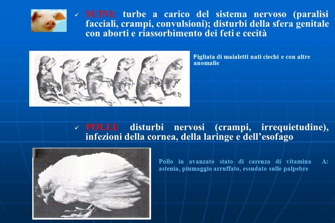 SUINI: turbe a carico del sistema nervoso (paralisi facciali, crampi, convulsioni); disturbi della sfera genitale con aborti e riassorbimento dei feti e cecità F igliata di maialetti nati ciechi e con altre anomalie POLLI: disturbi nervosi (crampi, irrequietudine), infezioni della cornea, della laringe e dellesofago Pollo in avanzato stato di carenza di vitamina A: astenia, piumaggio arruffato, essudato sulle palpebre