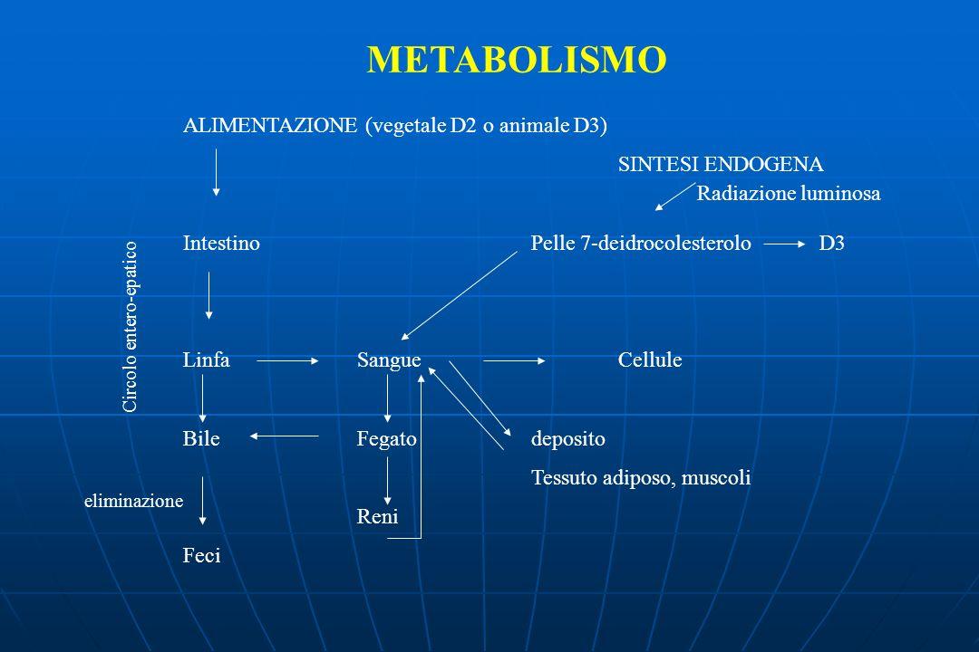 METABOLISMO ALIMENTAZIONE (vegetale D2 o animale D3) SINTESI ENDOGENA IntestinoPelle 7-deidrocolesterolo D3 Linfa SangueCellule BileFegatodeposito Tessuto adiposo, muscoli Reni Feci Circolo entero-epatico eliminazione Radiazione luminosa