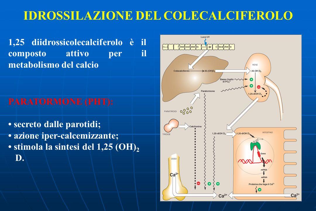 IDROSSILAZIONE DEL COLECALCIFEROLO 1,25 diidrossicolecalciferolo è il composto attivo per il metabolismo del calcio PARATORMONE (PHT): secreto dalle parotidi; azione iper-calcemizzante; stimola la sintesi del 1,25 (OH) 2 D.