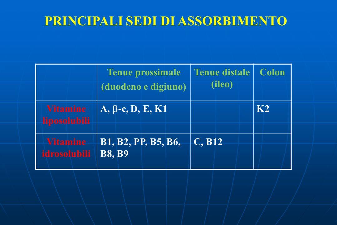 PRINCIPALI SEDI DI ASSORBIMENTO Tenue prossimale (duodeno e digiuno) Tenue distale (ileo) Colon Vitamine liposolubili A, -c, D, E, K1 K2 Vitamine idrosolubili B1, B2, PP, B5, B6, B8, B9 C, B12