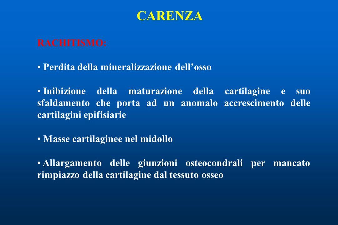 RACHITISMO: Perdita della mineralizzazione dellosso Inibizione della maturazione della cartilagine e suo sfaldamento che porta ad un anomalo accrescimento delle cartilagini epifisiarie Masse cartilaginee nel midollo Allargamento delle giunzioni osteocondrali per mancato rimpiazzo della cartilagine dal tessuto osseo