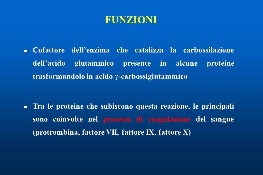 FUNZIONI Cofattore dellenzima che catalizza la carbossilazione dellacido glutammico presente in alcune proteine trasformandolo in acido -carbossiglutammico Tra le proteine che subiscono questa reazione, le principali sono coinvolte nel processo di coagulazione del sangue (protrombina, fattore VII, fattore IX, fattore X)