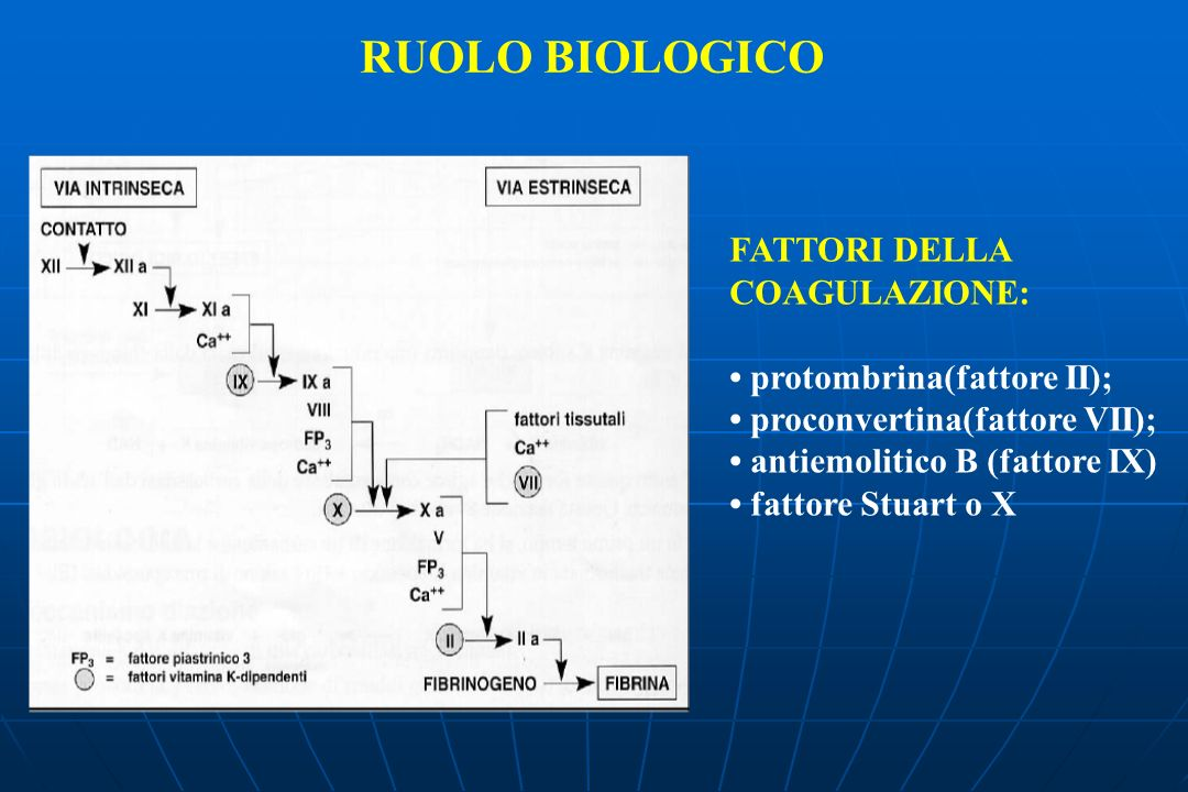 RUOLO BIOLOGICO FATTORI DELLA COAGULAZIONE: protombrina(fattore II); proconvertina(fattore VII); antiemolitico B (fattore IX) fattore Stuart o X