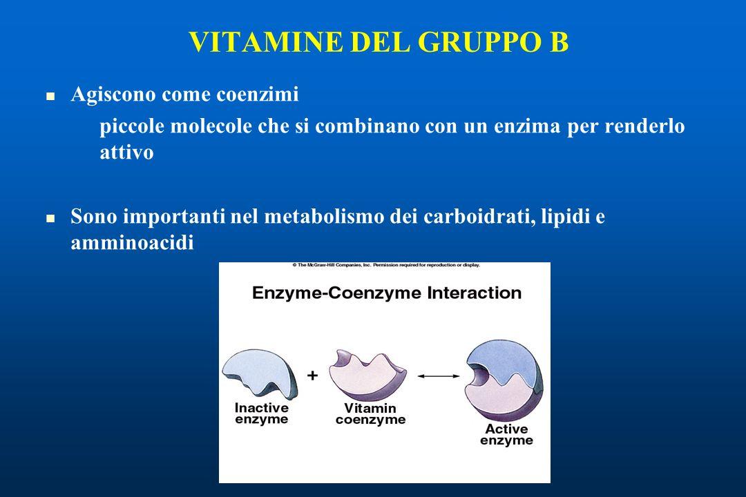 Agiscono come coenzimi piccole molecole che si combinano con un enzima per renderlo attivo Sono importanti nel metabolismo dei carboidrati, lipidi e amminoacidi VITAMINE DEL GRUPPO B