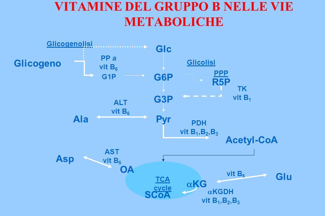 Glicolisi TCA cycle Glicogenolisi KGDH vit B 1,B 2,B 3 PP a vit B 6 Glc Glicogeno G1P R5P TK vit B 1 PDH vit B 1,B 2,B 3 KG SCoAAcetyl-CoA G6P Pyr G3P ALT vit B 6 Ala AST vit B 6 OA Asp vit B 6 Glu PPP VITAMINE DEL GRUPPO B NELLE VIE METABOLICHE