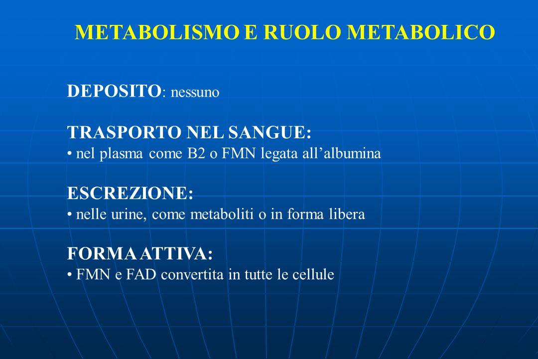DEPOSITO : nessuno TRASPORTO NEL SANGUE: nel plasma come B2 o FMN legata allalbumina ESCREZIONE: nelle urine, come metaboliti o in forma libera FORMA